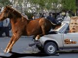 Гражданин Д.Кюйт попал под лошадь
