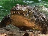 Житель ЮАР переплыл реку с крокодилами, чтобы получить билет на финал ЧМ-2010