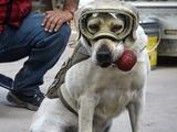 Собака-спасатель получила награду перед матчем Мексика — Тринидад и Тобаго