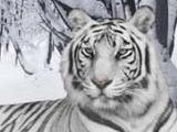 «Динамо» в год Белого Тигра: как это было
