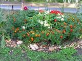 Цветет наша клумба?..