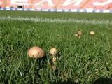 На поле стадиона «Црвены Звезды» выросли грибы (ФОТО)