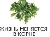 Обзор СМИ. ФФУ: very impotEnt people