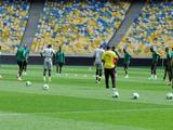 Камерунцы потренировались на «Олимпийском»