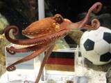 Российские букмекеры собираются купить осьминога Пауля