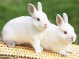 Год белого Кролика (Кота): как это было для «Динамо»