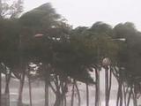 Ураган сорвал тренировку «Динамо»