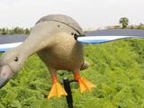 Хромая камуфляжная утка
