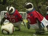 Вечерние матчи чемпионата мира пройдут при отрицательных температурах