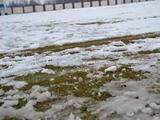 Матч Сербия — Шотладия может не состояться из-за сильного снегопада