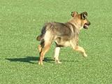 Матч Копа Судамерикана был прерван из-за собаки (ВИДЕО)