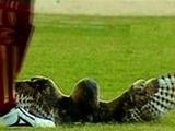 Панамский футболист, пнувший сову, теперь ударил соперника (ВИДЕО)