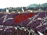 Болельщики «Фиорентины» выступили с акцией протеста на тренировочной базе клуба