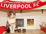 «Ливерпуль» устраивает судьбу кота-страйкера