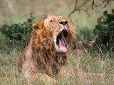 Кения борется против ФИФА