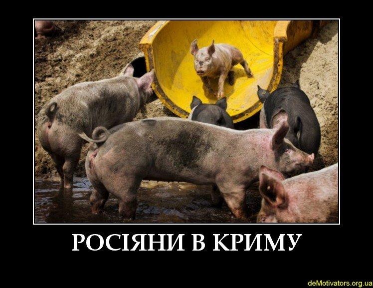 """""""Пи#дец, кошмар какой! Путин, чмо, что ты с Крымом сделал?! Он теперь засранный, как вся Россия"""", - крымчанка шокирована состоянием Орловского пляжа возле Севастополя - Цензор.НЕТ 2299"""