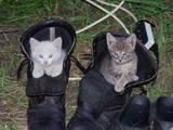 Про котиков...