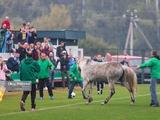 В Украине футбольный матч прервали две собаки. Животных выпроводили с поля, но на замену прибежал конь (ВИДЕО)