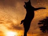Коты и закаты просто созданы друг для друга
