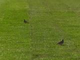 В стане соперника. На новом стадионе «Ингульца» постелили газон (ВИДЕО)