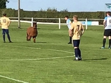 ВИДЕО: В Англии во время матча на поле выбежала альпака