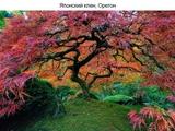 Деревья, которые можно увидеть только в сказке