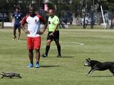 Погоня собаки за ящерицей прервала футбольный матч в Аргентине (ФОТО)