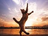 17 фотографий котов, сделанных в самый нужный момент.