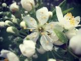 Александр Шовковский: «Весны вам в сердце!!!»