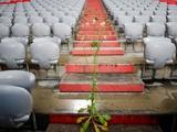 Стадион «Баварии» порос сорняками во время карантина (ФОТО)