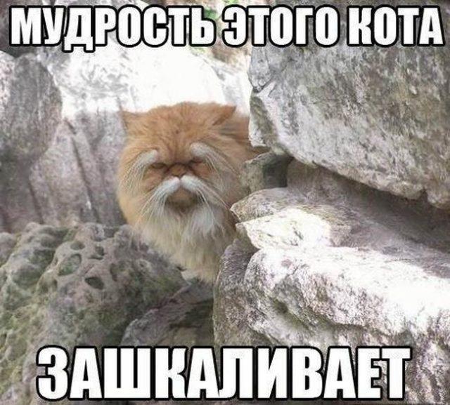 https://dynamo.kiev.ua/media/crawled/2018/03/17/podborka_dnevnaya_54-640x577_1.jpg